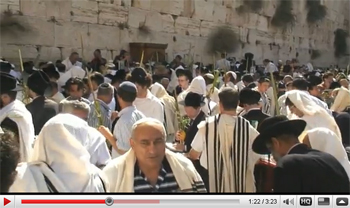 Sukkot video thumb